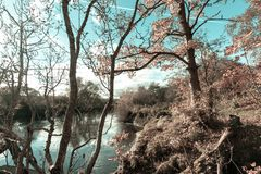 Fantasy forest at the river. Beautiful, imaginary background with fairy tale leaves in pink and blue bright sky royalty free stock image