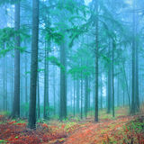 Fantasy forest Royalty Free Stock Image