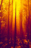 Fantasy forest in sunlight Royalty Free Stock Photo