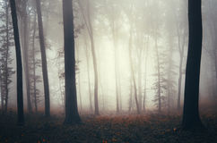 Fantasy forest with thick fog Stock Image