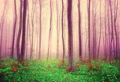 Fantasy forest trees background Stock Photo