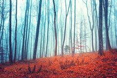 Fantasy forest trees. With orange red colored leaves on the woods floor Royalty Free Stock Photo