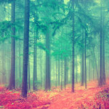 Fantasy forest vintage Royalty Free Stock Image