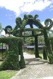 Fantasy garden entrance. A gate shape climbing tree Stock Images