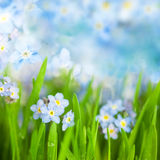 Fantasy Gentle Floral Background / Blue Flowers Defocused Stock Images