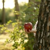 Fantasy girl holding a red apple in the forest. Robbin hood metaphor Royalty Free Stock Photos