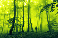Fantasy horror moment in creepy foggy forest Royalty Free Stock Images