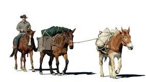 Fantasy illustration of a cowboy and his pack mules on a white background vector illustration