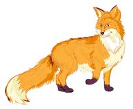 Fantasy illustration of cute red fox on white background. Hand-drawn vector image. Royalty Free Stock Photos