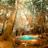 Fantasy jangle landscape with turquoise pond water Stock Photos