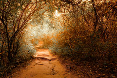 Fantasy landscape at tropical jungle forest with tunnel Royalty Free Stock Images