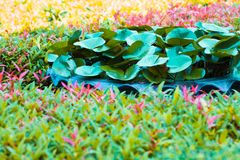 Fantasy leaf lotus and leaf spike flower in sping sumer. After raining in the morning, technical cost-up Royalty Free Stock Image