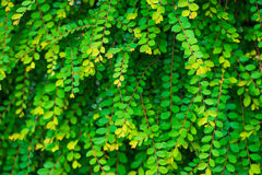 Fantasy leaves,green color. Fantasy leaves, Mint green color, very beatuy royalty free stock photos