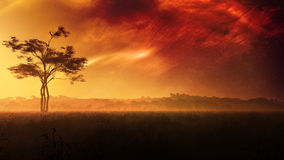 Fantasy Meadow Evening Sky. Nebula clouds are visible in the evening sky on a meadow with tree, vegetation and hills on the background covered with trees Royalty Free Stock Photo