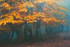 Fantasy forest in autumn. Fantasy misty forest in autumn royalty free stock images