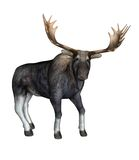 Fantasy moose Stock Images