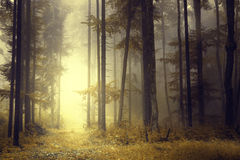 Fantasy orange forest light Stock Photography