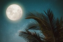 Fantasy palm tree tropical leaf with wonderful full moon stock photography