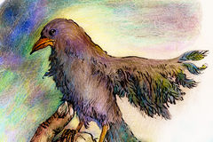 Fantasy park bird detailed colorful ornamental drawing Royalty Free Stock Photography