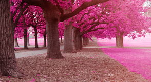 Fantasy park. With pink colors Royalty Free Stock Photos