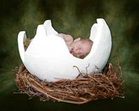 Fantasy Portrait Ifant Sleeping in Cracked Egg Royalty Free Stock Image