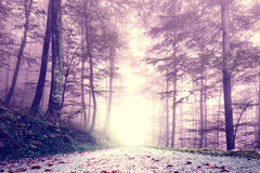 Fantasy purple color foggy forest road Royalty Free Stock Photos