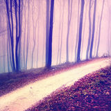 Fantasy purple color forest road. Fantasy purple color blurry and foggy forest road with soft blue light Stock Photo