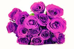 Fantasy purple roses bouquet on white background. vintage style Stock Photo