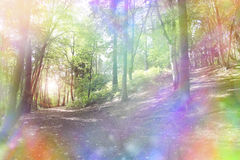 Fantasy rainbow bokeh woodland stock images