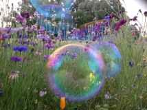 Fantasy rainbow bubbles and flowers Stock Images