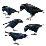 Fantasy ravens 1 Royalty Free Stock Image