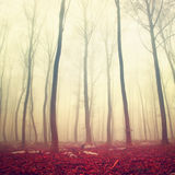 Fantasy red color forest Stock Image