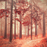 Fantasy red color saturated forest Stock Image