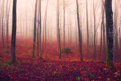 Fantasy red colored forest scene Royalty Free Stock Image