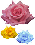 Fantasy roses, and one real royalty free illustration