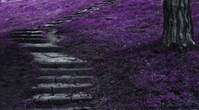 Fantasy stairs. Fantasy scene of stairs in the woods Royalty Free Stock Image