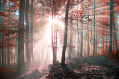 Fantasy Sunny Autumn Forest Stock Photography