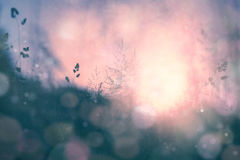 Fantasy sunset bokeh blurred meadow background Royalty Free Stock Photography