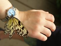 Fantasy Time. Butterfly on child's wrist Royalty Free Stock Photography