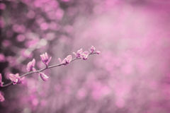 Fantasy toned nature background in vintage pink color. Royalty Free Stock Image