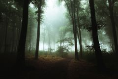 Free Fantasy Trail In Foggy Forest. Strange Light In The Background Through The Trees Stock Image - 122084291