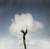 Tree  in the cloud Royalty Free Stock Photo