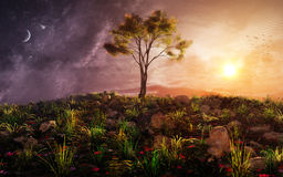 Fantasy Tree On A Hill Sunset royalty free stock image