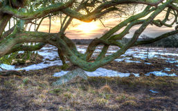 Fantasy tree sunrise Royalty Free Stock Image