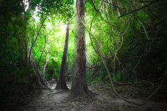 Free Fantasy Tropical Forest With Road Path Way. Thailand Nature Royalty Free Stock Photo - 61127185