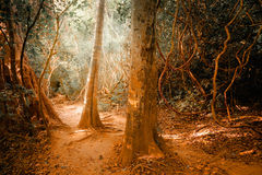 Fantasy tropical jungle forest in surreal colors. Concept landsc Stock Images