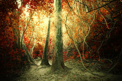 Fantasy tropical jungle forest in surreal colors. Concept landsc. Ape for mysterious background Stock Photography