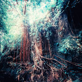 Fantasy tropical jungle forest in surreal colors. Concept landsc Stock Image
