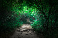 Fantasy tropical jungle forest with tunnel and path way stock photography