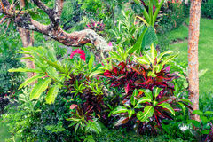 Fantasy tropical plants  in mossy garden Royalty Free Stock Images